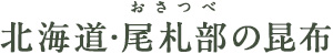 北海道・尾札部の昆布